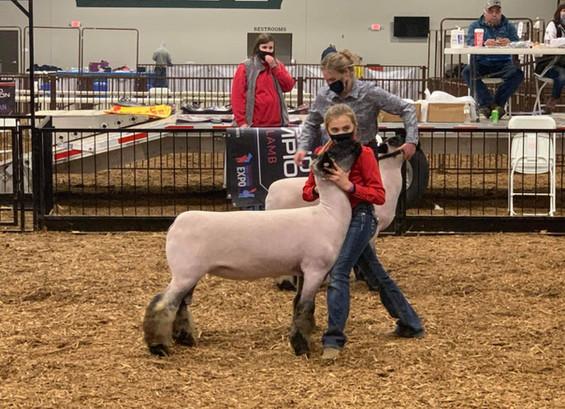Reserve Champion Division Ewe Lamb  Pennsylvania Youth Livestock Expo
