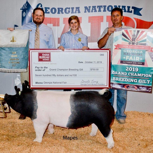Grand Champion Breeding Gilt  Georgia National Fair  Shown by: Carolyne Turner  Sired by: Dirty Love'n