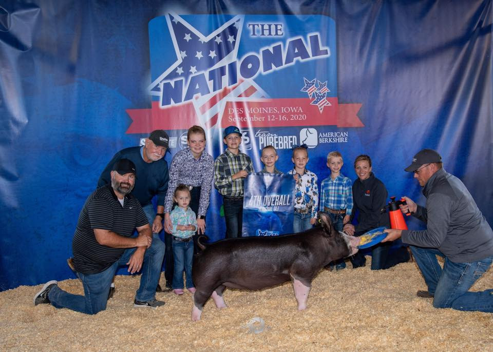 4th Overall Berk Gilt The National Clea Kocher Sired by Shattered (Laird's)