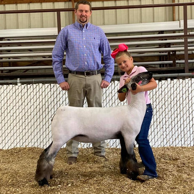 Grand Champion Commercial Ewe