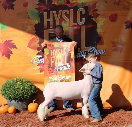 Champion White Face Commercial Ewe, 3rd Overall Commercial Ewe 2020 HYSLC Fall Classic  Shown By: Tucker Morrical  Sire: Colorblind