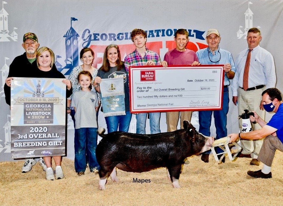 Georgia National Fair  3rd Overall Breeding Gilt & Champion Berk Ben Moore Sired By: Stressed Out 70-1
