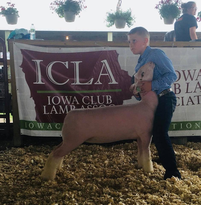 Champion Whiteface 2018 Floyd County ICLA Jackpot Shown by JD Morrical Shoot Yeah x Witness