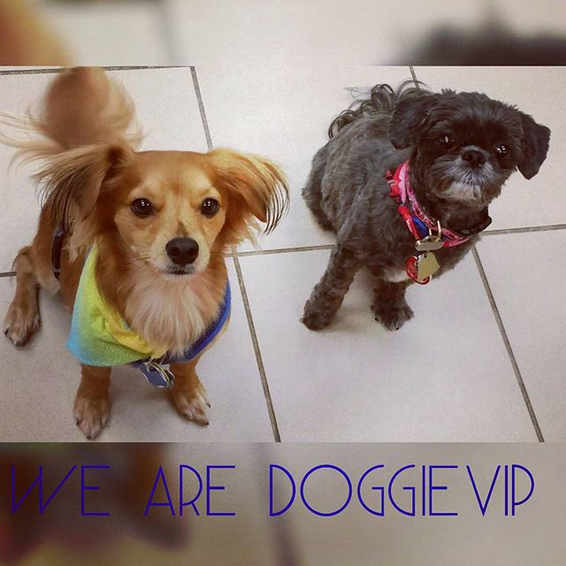 Instagram - @doggievip where your pooch is pampered #happydog #rescue #rescuedog