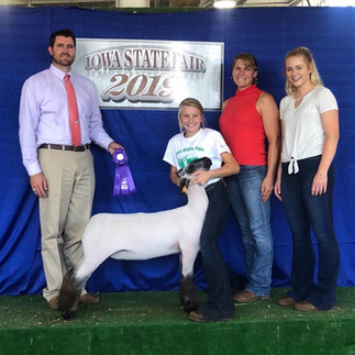 Champion Div 2 Commercial Ewe