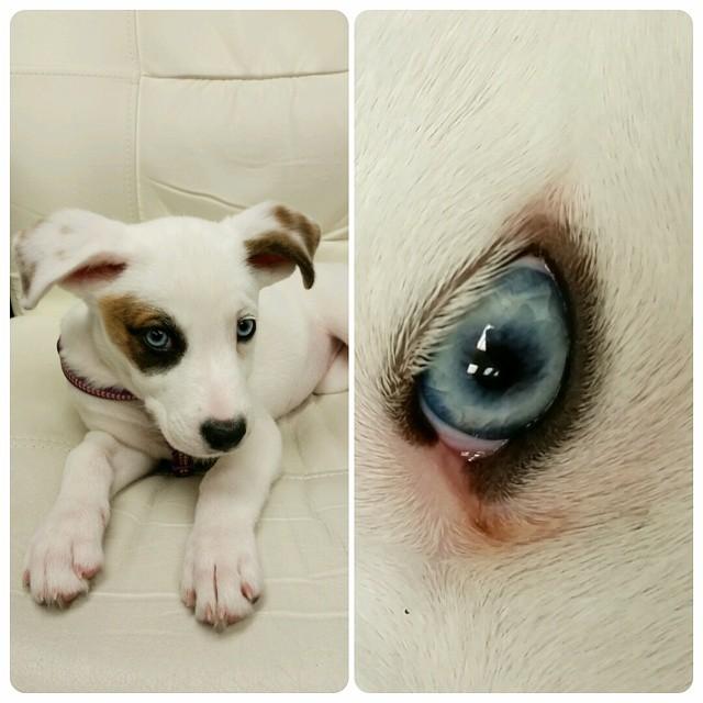 Instagram - DOGGIE VIP MAKES ME HAPPY @doggievip #jackrussell #husky #dogdaycare