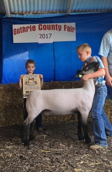 3rd Overall Commercial Ewe  2017 Guthrie County Jackpot Shown by J.D. Morrical Sired by Bushwacker
