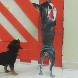 Instagram - Lola at #doggievip DOGGIE VIP MAKES ME HAPPY #happydog #smailingdog