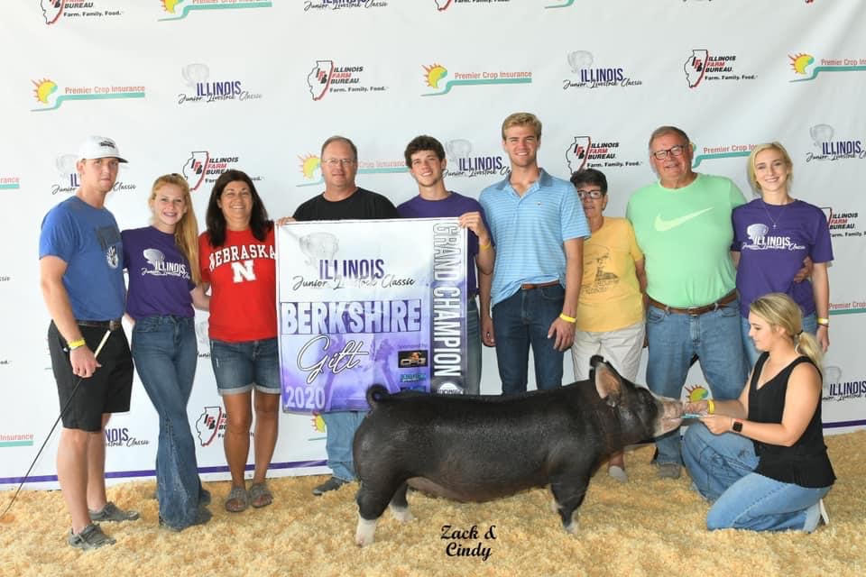 Champion Berkshire Gilt