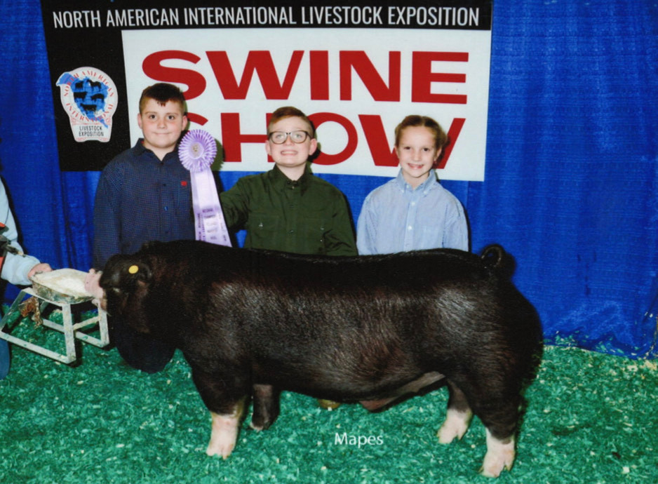Champion Poland  North American  Shown by: Hawk Family
