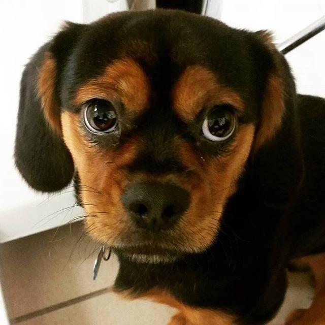 Instagram - @doggievip #dogdaycare #dogwalkers #doglover #puppies #yorkielovers