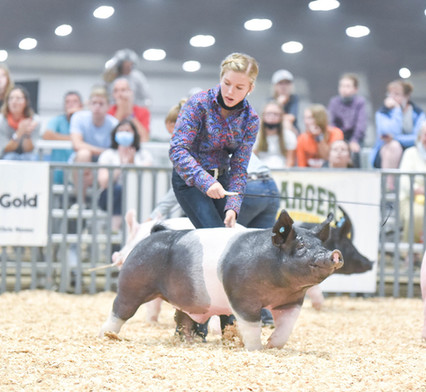 Indiana Stock Show Grand Champion Barrow and Champion Cross Hadley Hendrickson Sired By Wags (Heimer)
