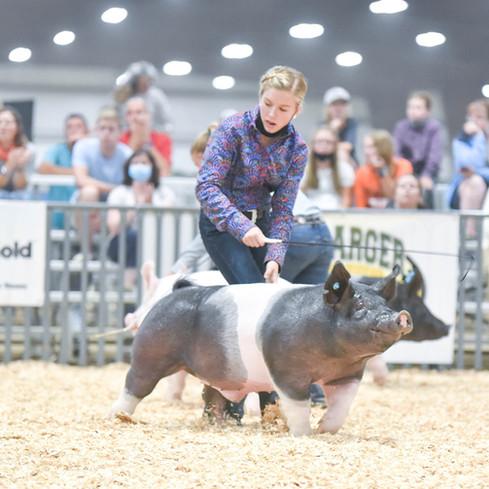 Indiana Stock Show Grand Champion Barrow and Champion Cross Hadley Hendrickson Sired By Wags (Heimer)