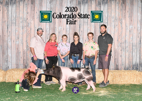 Res. Champion Light Weight Cross Barrow Colorado State Fair Kylie Kayser
