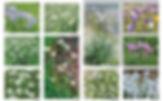 palette veg.jpg