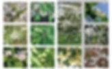 palette veg 2.jpg