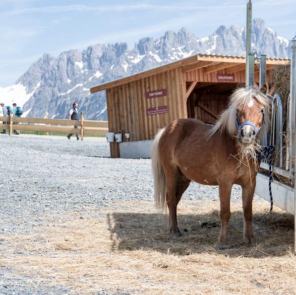 Pony Alm