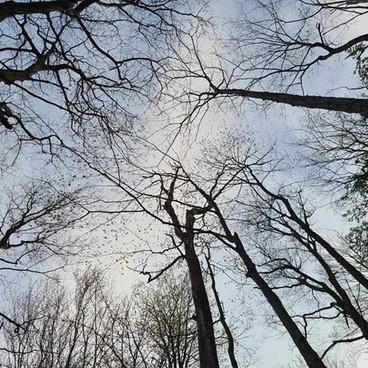 Dark Trees