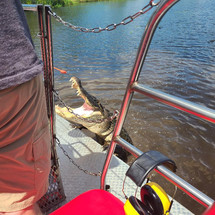 Airboat Adventures Gator.jpeg