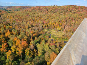 Get your Fall Foliage fix by visiting these breathtaking locations!