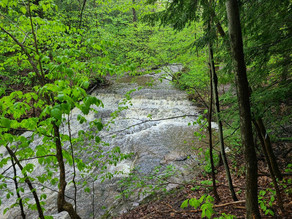 Nature Spots to Check out next time you're in East Aurora, NY!