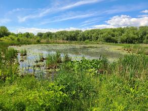 Spring Time - 5 Places To Hike Near Buffalo, NY.