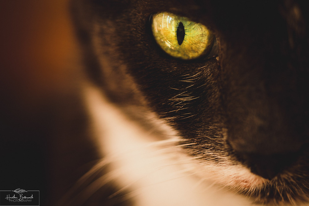 close up of a cat taken in Leeds Yorkshire during lockdown