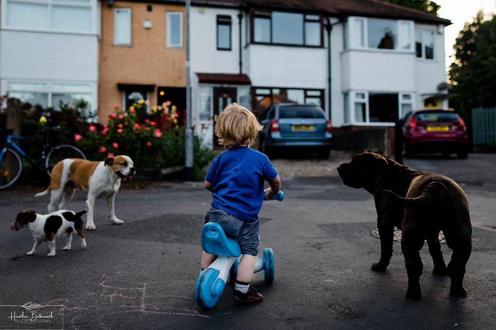 a child playing with dogs in the street