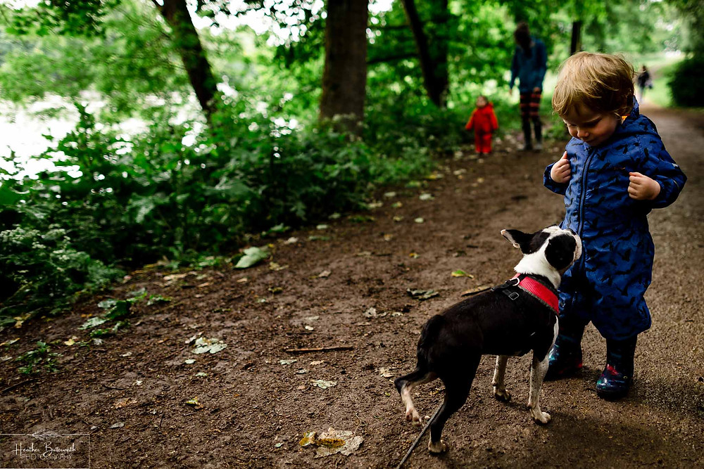boy playing with a dog in roundhay park woods after restrictions were slightly lifted after the COVID-19 lockdown in Leeds , Yorkshire in June 2020