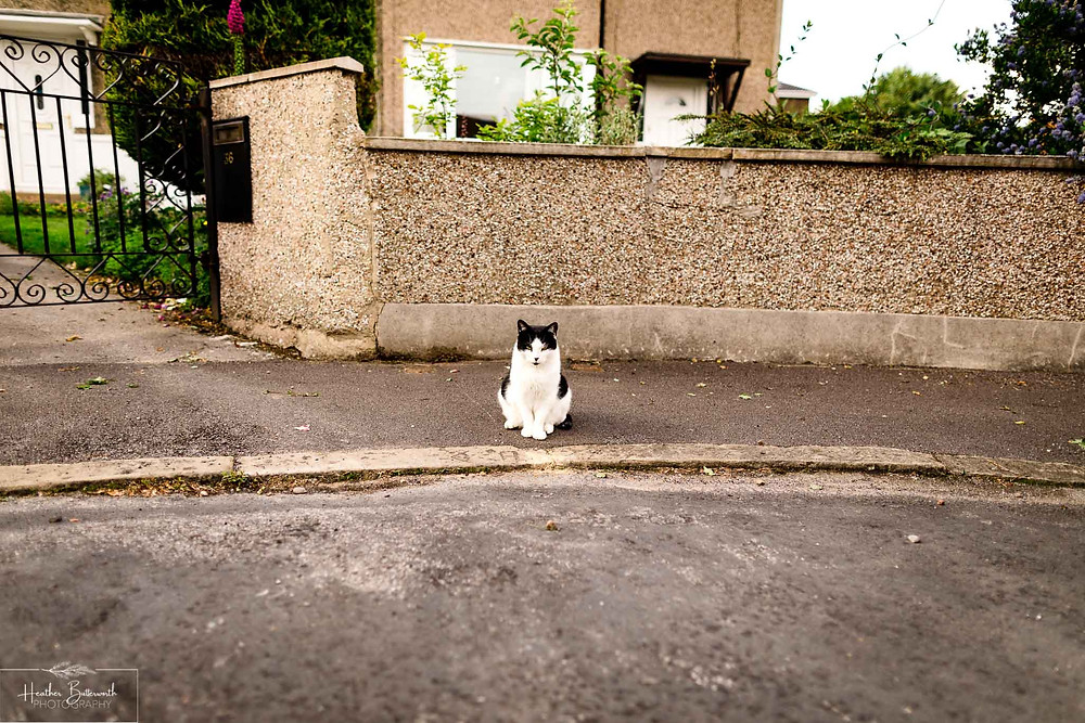 cat sat on the street