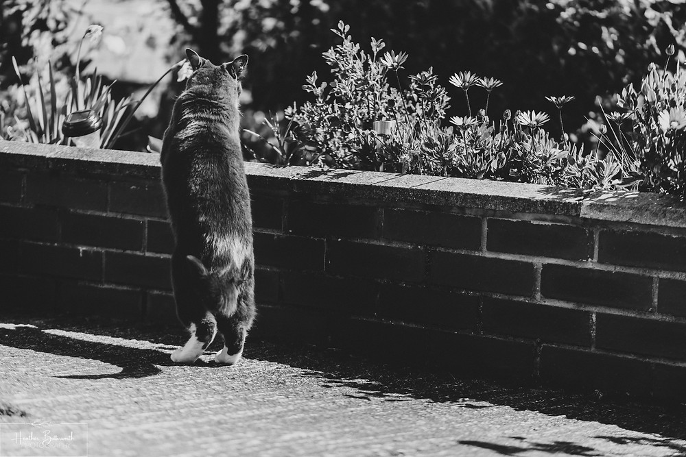 documentary family photography taken during lockdown in 2020 in Leeds Yorkshire by Photographer Heather Butterworth of a cat jumping