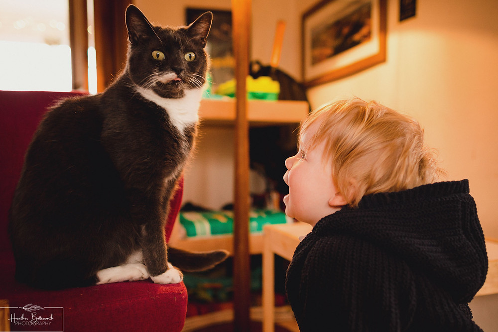 toddler looking open mouthed up at a grey cat on a chair
