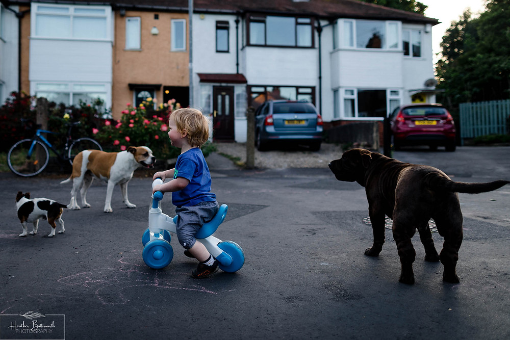 a toddler happily playing with dogs on his bike
