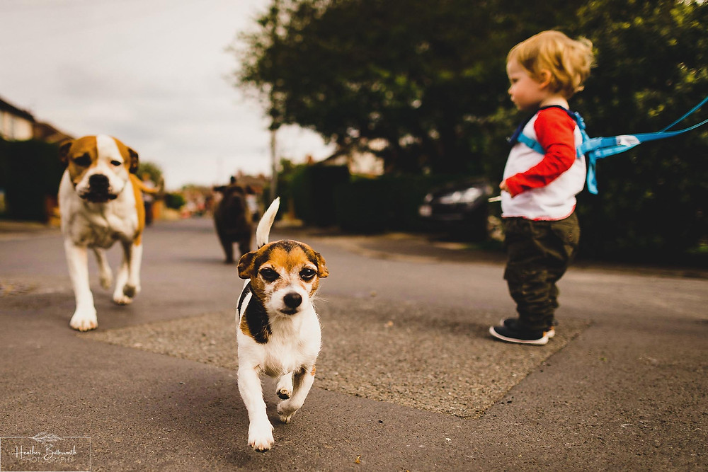 Dogs in the road in Leeds, Yorkshire. Image by Heather Butterworth Photography
