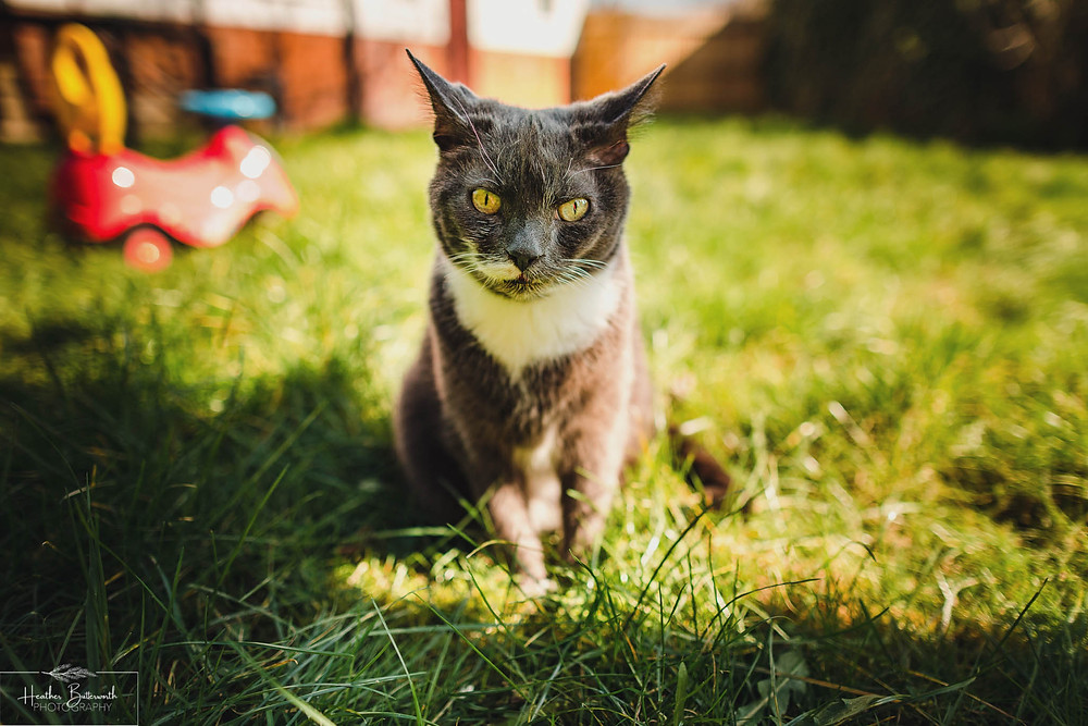 grey cat in the garden on a sunny day