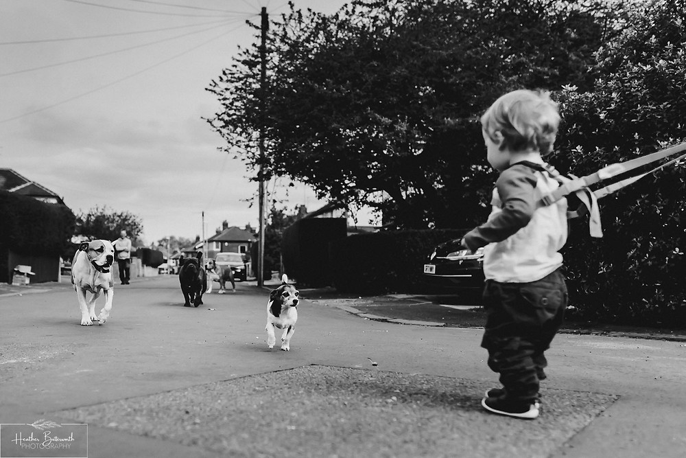 Barney being greeted by a family of dogs in the road in Leeds, Yorkshire. Image by Heather Butterworth Photography