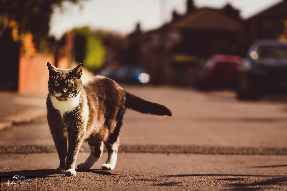 documentary family photography taken during lockdown in 2020 in Leeds Yorkshire by Photographer Heather Butterworth of  a cat in the street