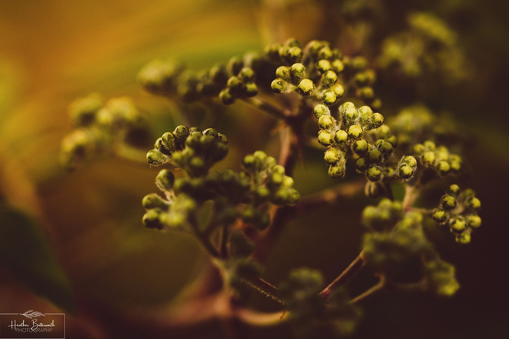 macro photo of a plant taken during lockdown in 2020 in Leeds Yorkshire by Photographer Heather Butterworth