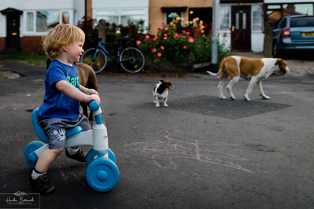 a toddler happily playing with dogs