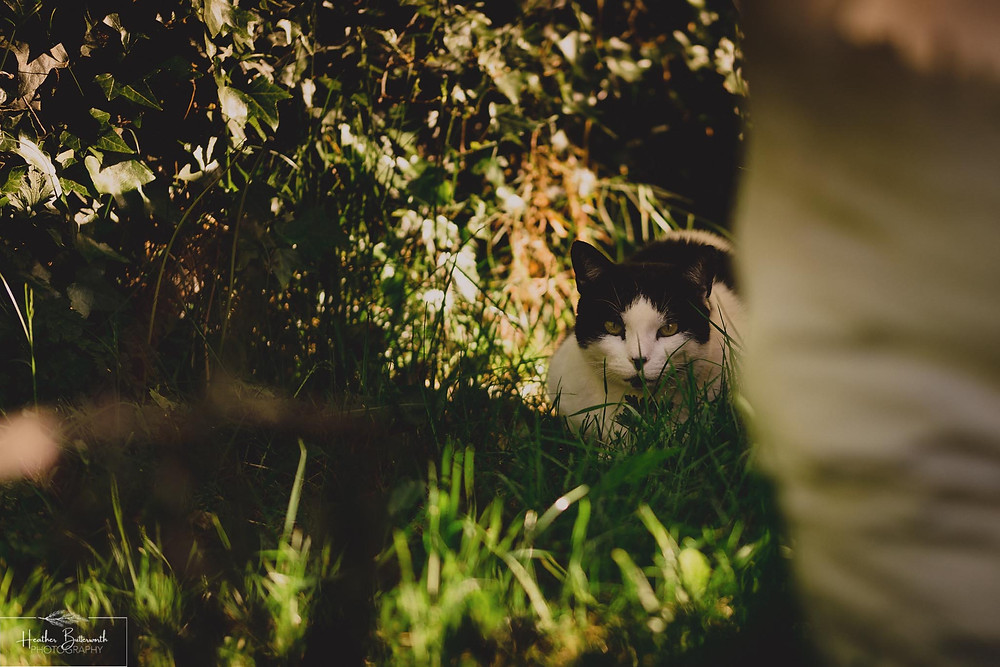 Cat in the garden taken by Heather Butterworth during the COVID-19 pandemic in Leeds Yorkshire in May 2020