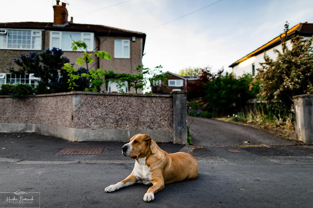 a dog lying in the street