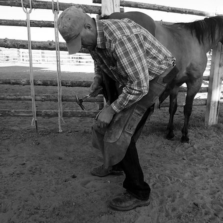 Quality, Experience, Horsemanship, Knowlege, Reliability