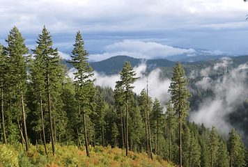 IdahoForestsEnvironmentalBenefits-1024x6