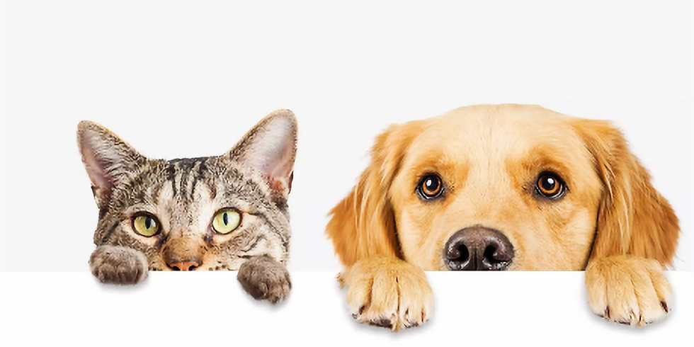 Supporting your pets wellness with nutrition and Essential Oils