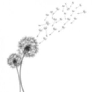 conception-pissenlit-fond_1053-512.jpg