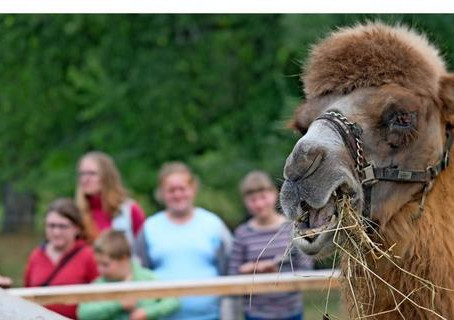 In Tautendorf lässt Kamel Paul entspannt die Lippe und die Seele baumeln