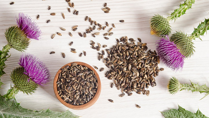 Organic Sifted Milk Thistle Seed 有機已洗淨薊奶草