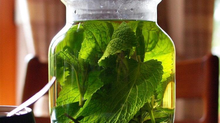 Organic Sifted Lemon Balm  有機已洗淨香蜂草