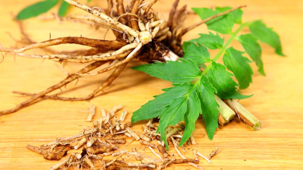 Organic Sifted Valerian Root 有機已洗淨纈草根