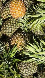pineapples_colombia_hero_edited.jpg